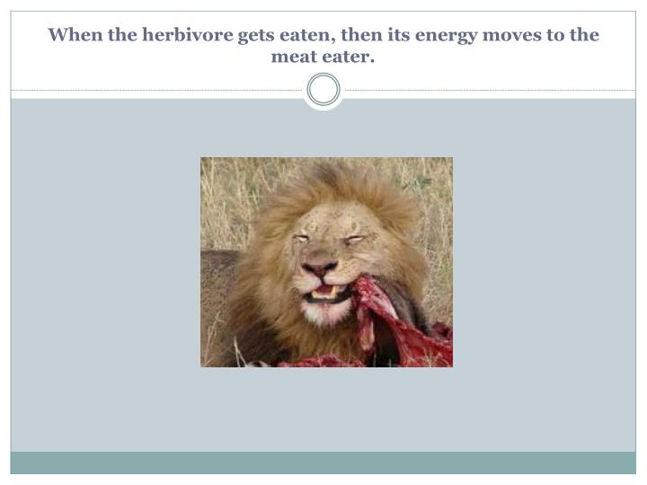 When the herbivore gets eaten, then its energy moves to the