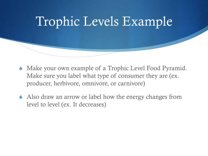 Trophic Levels Example