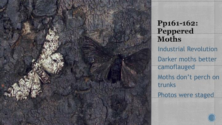 Pp161-162: Peppered Moths