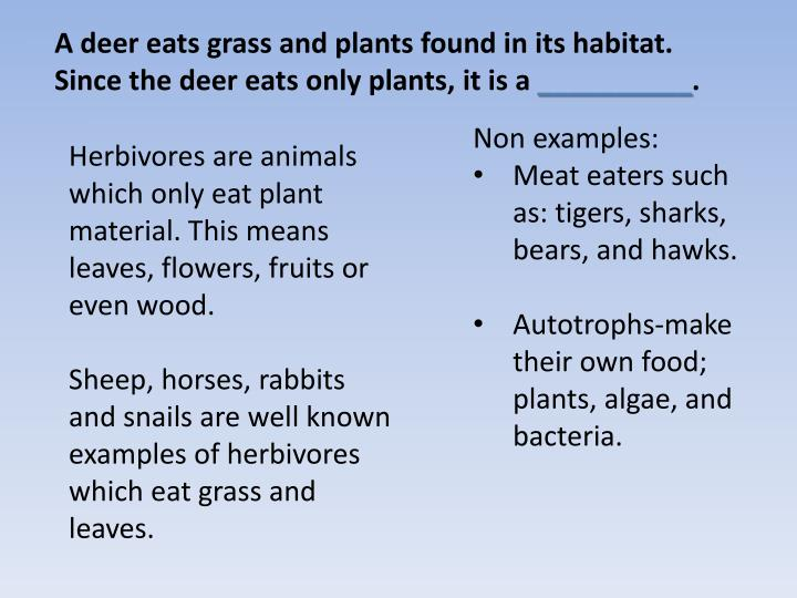 A deer eats grass and plants found in its habitat.  Since the deer eats only plants,