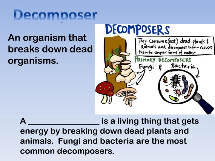 Decomposer
