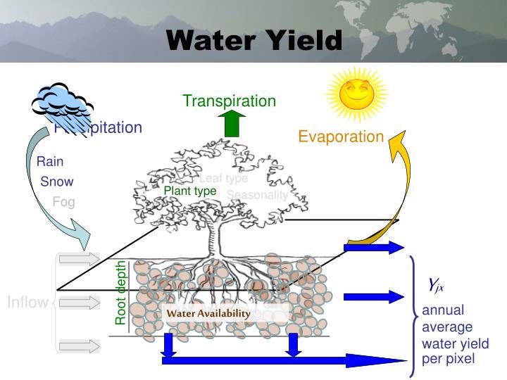 Water Yield