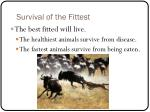 survival of the fittest3