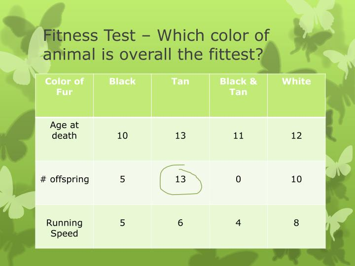 Fitness Test – Which color of animal