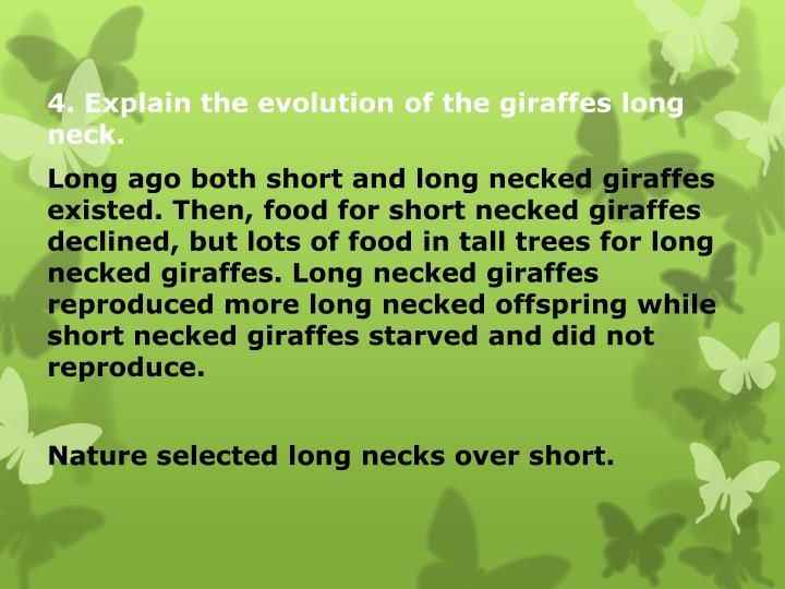 4. Explain the evolution of the giraffes long neck.