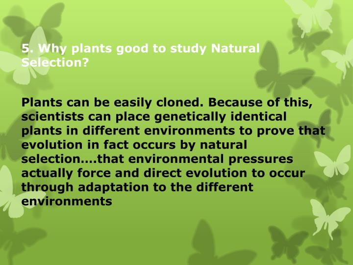 5. Why plants good to study Natural Selection?