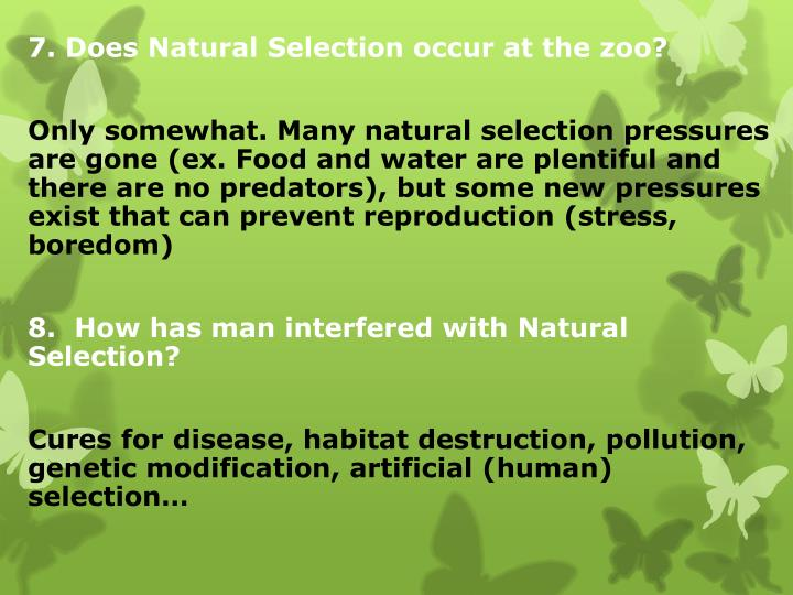 7. Does Natural Selection occur at the zoo?