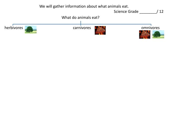 We will gather information about what animals eat.