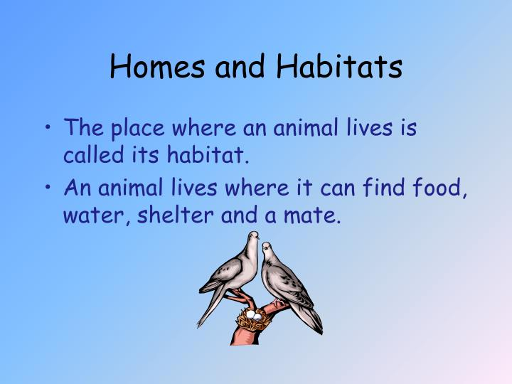 Homes and habitats