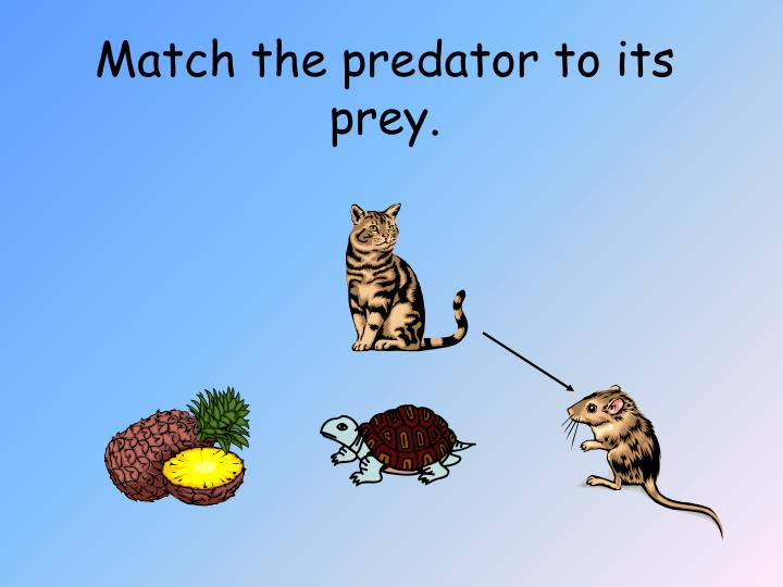 Match the predator to its prey.