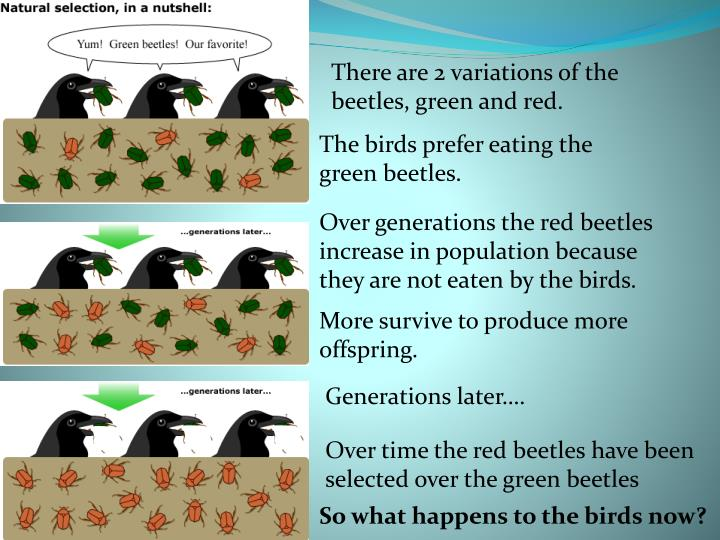 There are 2 variations of the beetles, green and red.