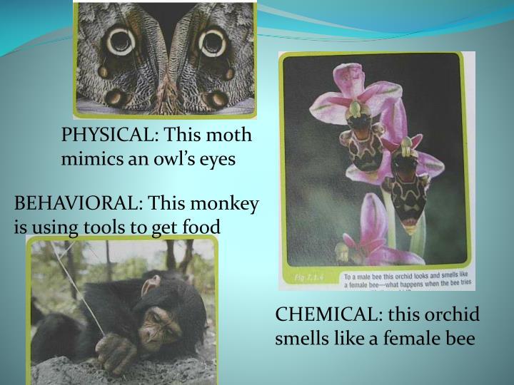 PHYSICAL: This moth mimics an owl's eyes