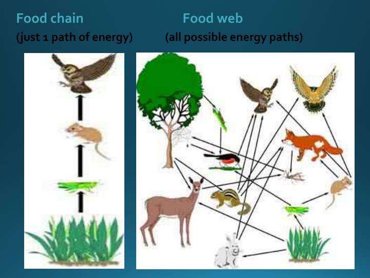 Food chainFood web
