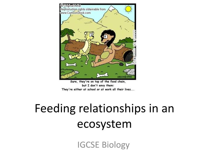 Feeding relationships in an ecosystem