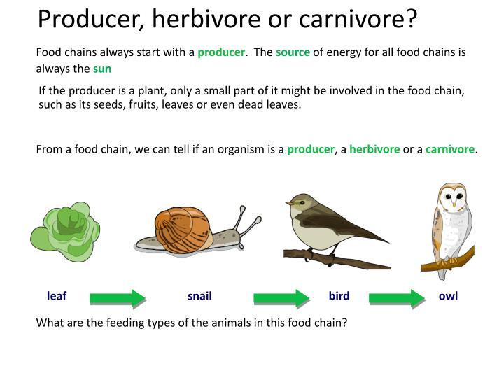 Producer, herbivore or