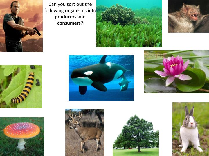 Can you sort out the following organisms into