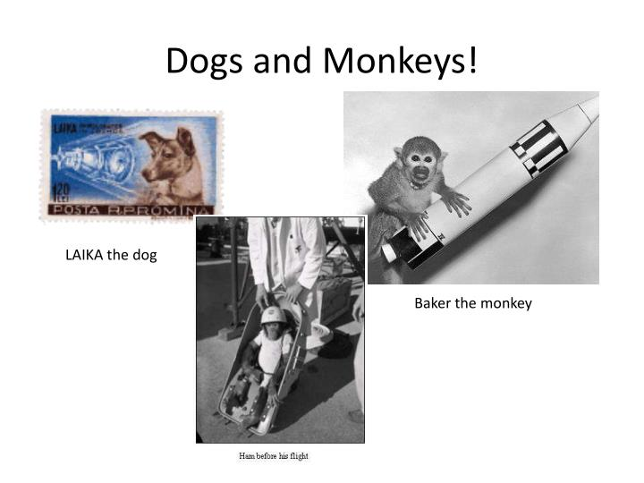 Dogs and Monkeys!