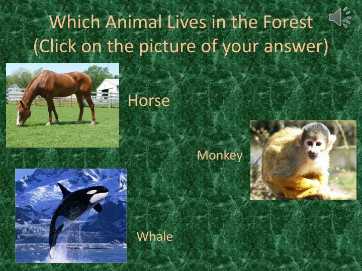 Which Animal Lives in the Forest