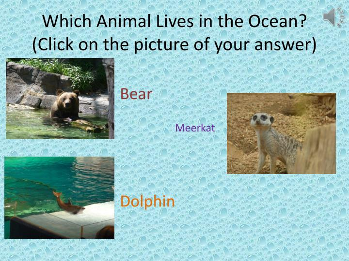 Which Animal Lives in the Ocean