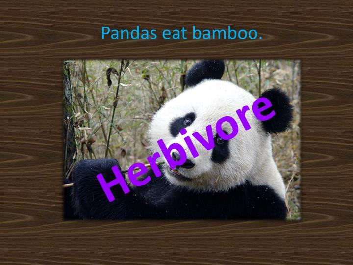 Pandas eat bamboo.