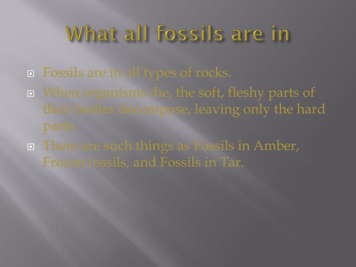What all fossils are in