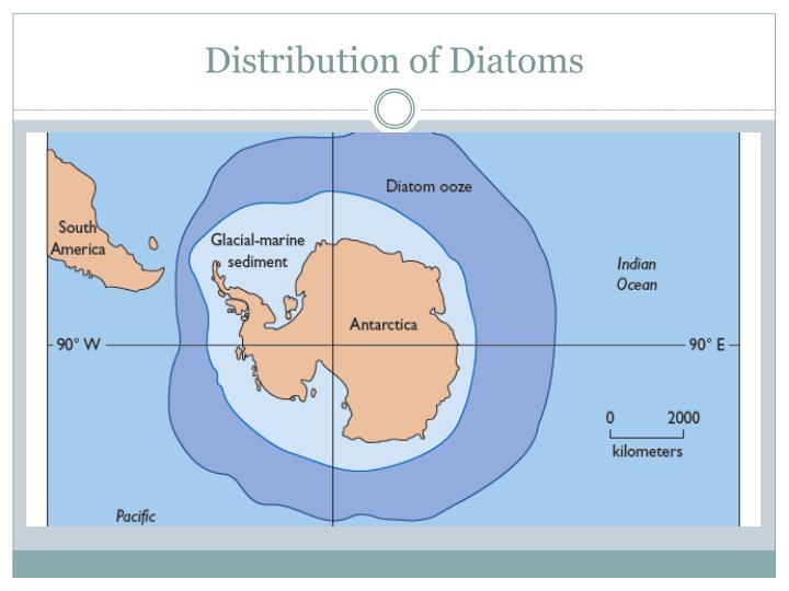 Distribution of Diatoms