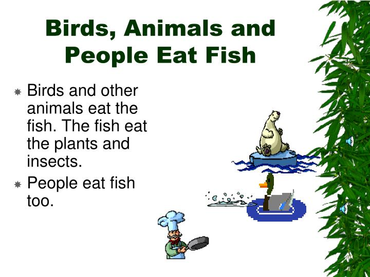 Birds, Animals and People Eat Fish
