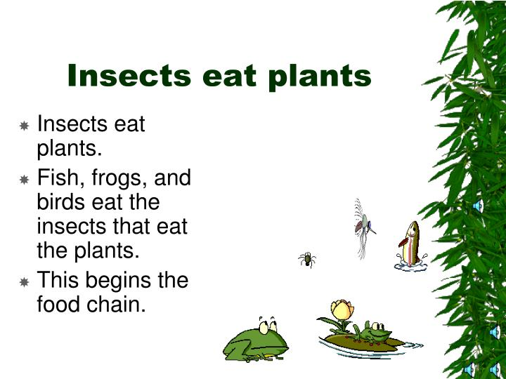 Insects eat plants