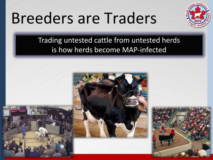 Trading untested cattle from untested herds