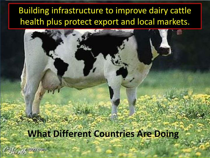 Building infrastructure to improve dairy cattle health plus protect export and local markets.