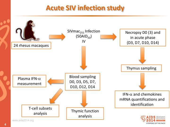 Acute SIV infection study