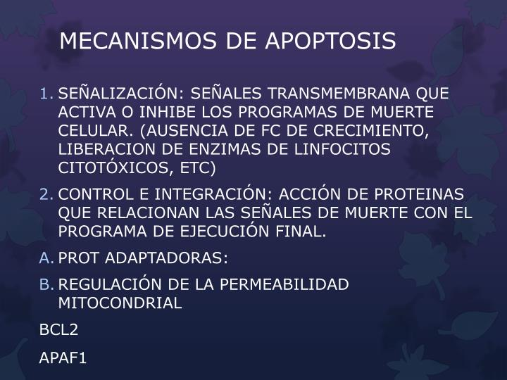 MECANISMOS DE APOPTOSIS