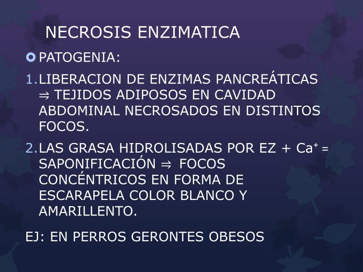 NECROSIS ENZIMATICA