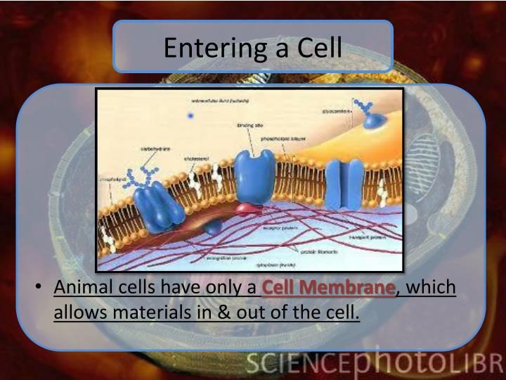 Entering a Cell