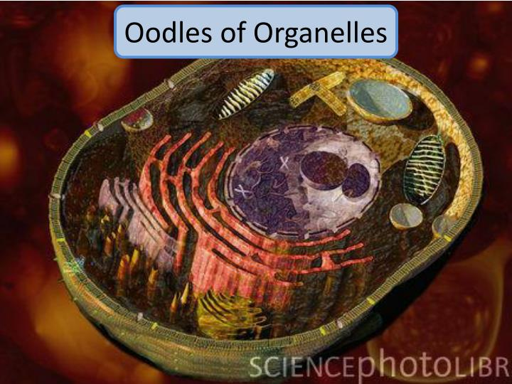 Oodles of Organelles