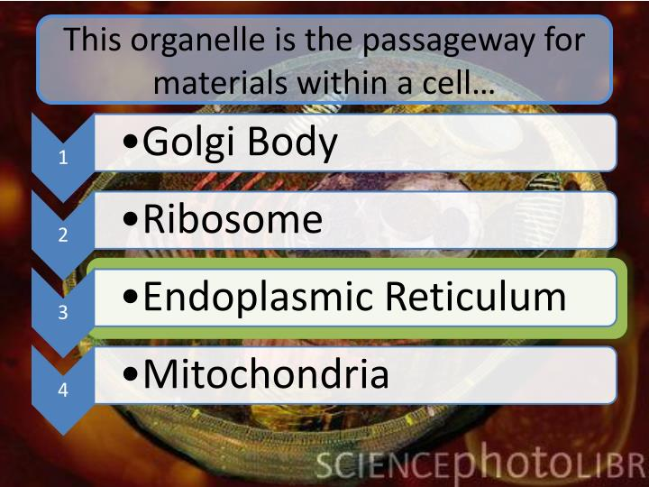 This organelle is the passageway for materials within a cell…