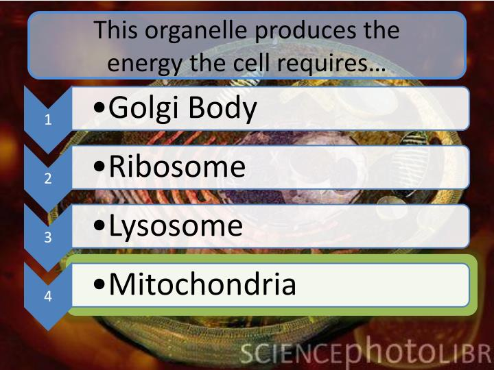 This organelle produces the         energy the cell requires…
