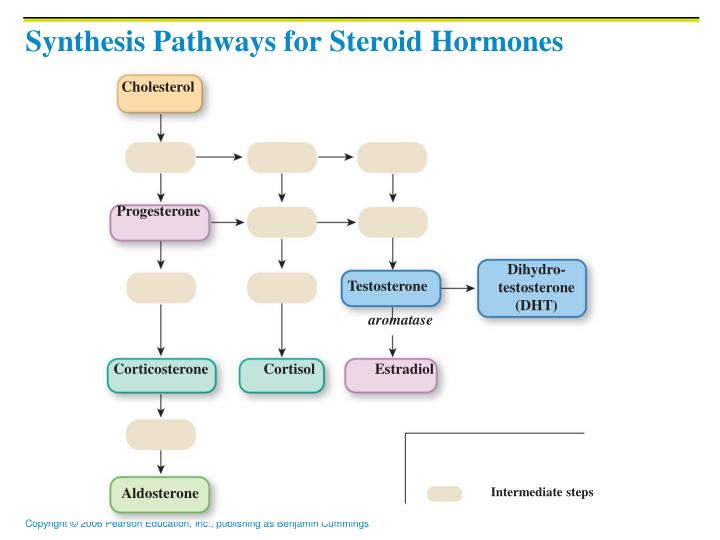 Synthesis Pathways for Steroid Hormones