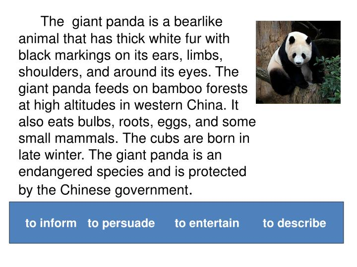 The giant panda is a bearlike animal that has thick white fur with black markings on its ears, limbs, shoulders, and around its eyes. The giant panda feeds on bamboo forests at high altitudes in western China. It also eats bulbs, roots, eggs, and some small mammals. The cubs are born in late winter. The giant panda is an endangered species and is protected by the Chinese government