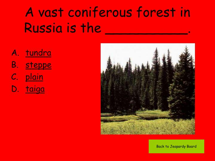 A vast coniferous forest in Russia is the __________.