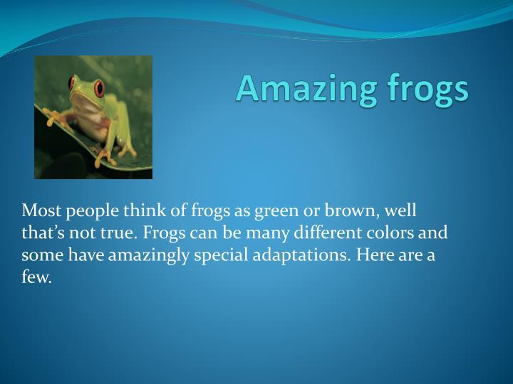 Amazing frogs