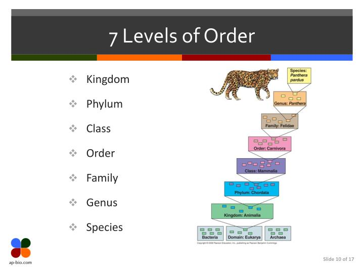 7 Levels of Order