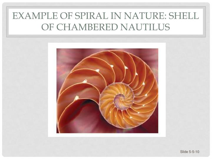 Example of Spiral in Nature: Shell of Chambered Nautilus