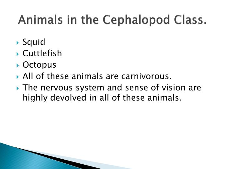 Animals in the Cephalopod Class.