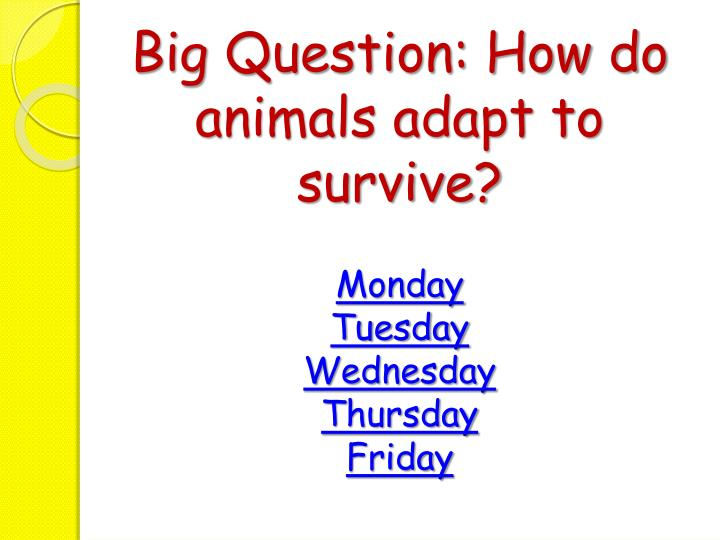 Big Question: How do animals adapt to survive?