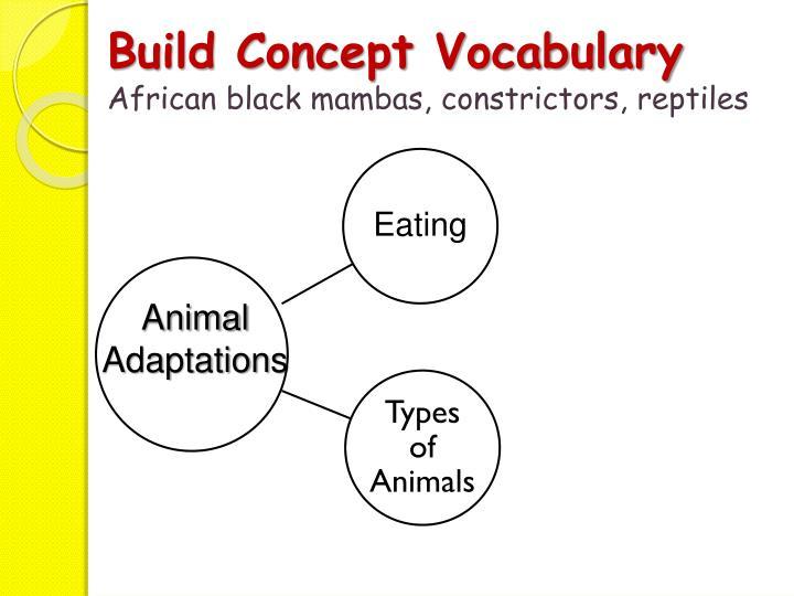Build Concept Vocabulary