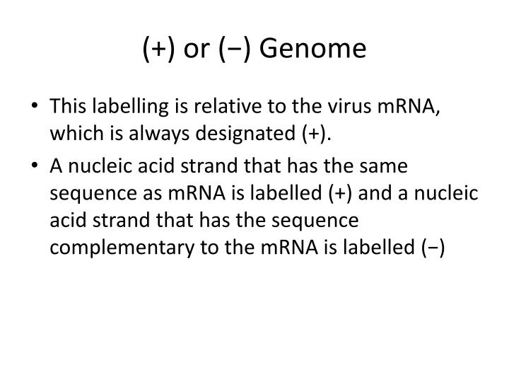 Or genome