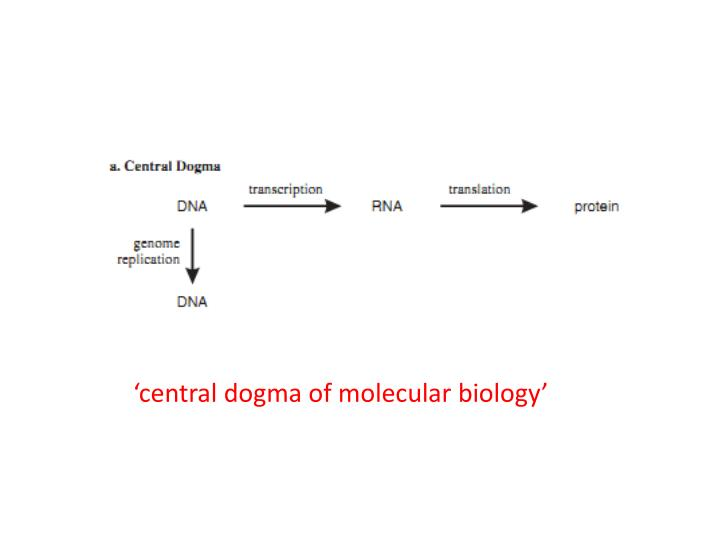 'central dogma of molecular biology'