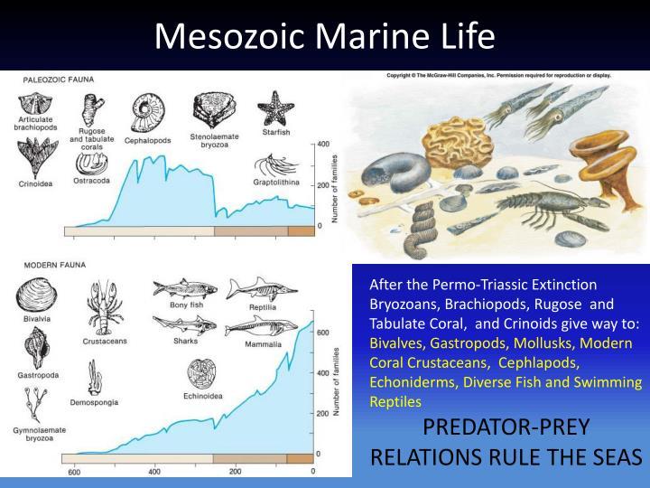 Mesozoic Marine Life