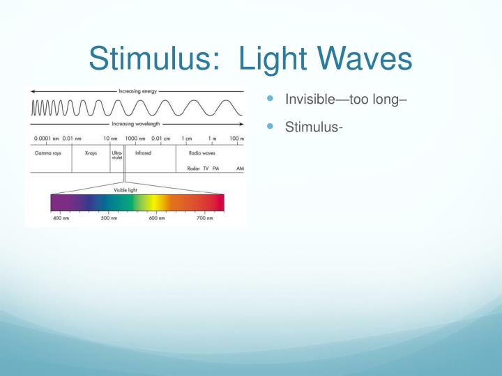 Stimulus:  Light Waves